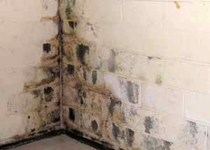 Basement Water Damage & Mold Removal   All Jersey